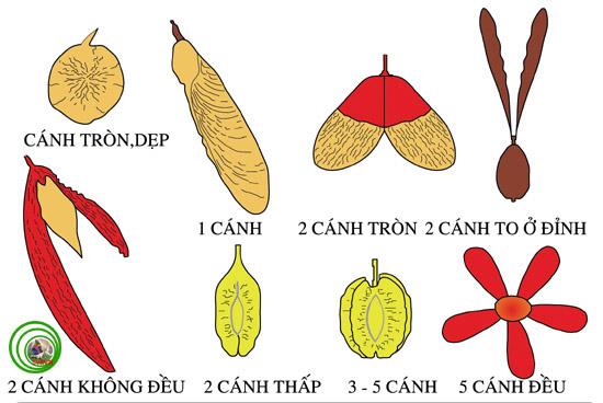 Thuật ngữ cây cảnh và cấu trúc thực vật (Phần 1)  D_qua